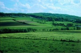 The deep green countryside of Southern Belgium